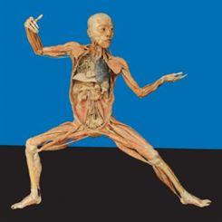 Doenças que afetam os Sistemas do Corpo Humano
